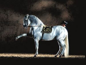 Dressiertes Pferd in der Spanische Hofreitschule