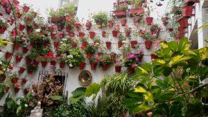 Blumenbewachsener Patio in Córdoba